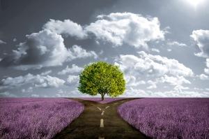 Crossroad in lavender meadow